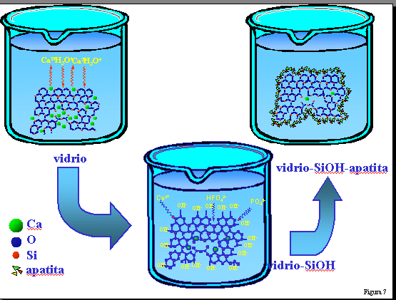 Fig. 7: Posible mecanismo de reacción de un vidrio reactivo en contacto con un fluido