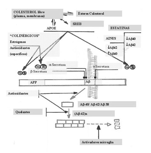 AEC La muerte neuronal 02